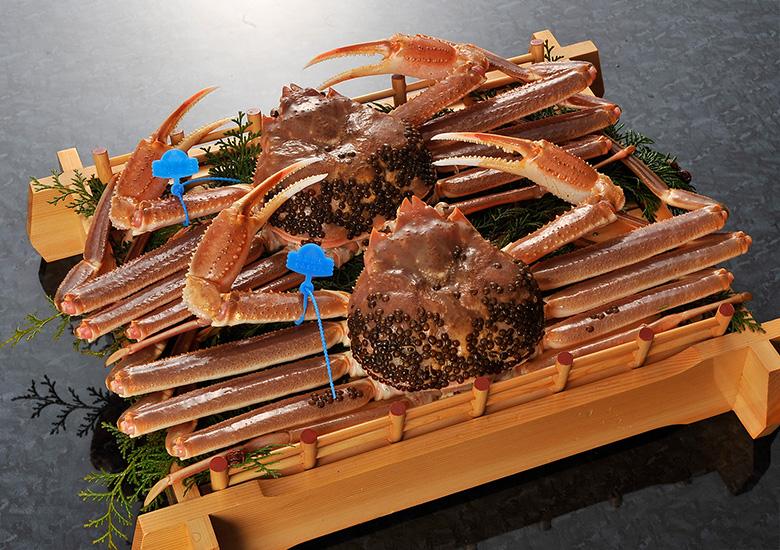 Premium Matsuba crab TsuiyamaCrab