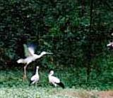 Hyogo Park of the Oriental White Stork